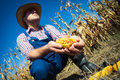 Farmer holding corn cob in hand in corn field Royalty Free Stock Photo