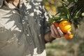 Farmer Holding Oranges In Farm