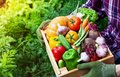 Farmer holds in hands wooden box with autumn crop of organic vegetables against backyard background