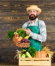 Farmer with homegrown vegetables. Fresh organic vegetables in wicker basket and wooden box. Man cheerful bearded farmer Royalty Free Stock Photo