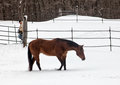 Farmer and horse turning out older quarter stallion into pasture of fresh snow winter in wisconsin Royalty Free Stock Images
