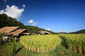Farmer house near terraced rice field Stock Photos