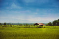 Farmer hut on green field at prajantakam district prachin buri province thailand Stock Photo