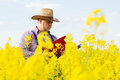 A farmer inspects rapeseed Royalty Free Stock Photo