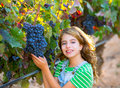 Farmer kid girl in vineyard harvest autumn leaves in mediterrane Royalty Free Stock Photo