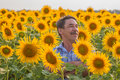 Farmer looking at sunflower standing in a field the crop Royalty Free Stock Photography