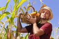 Farmer with maize basket Stock Photography
