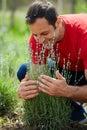 Farmer checking his lavender plantation Royalty Free Stock Photo