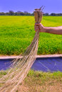 Farmer man holding dried weed cleaning rice fields Royalty Free Stock Images