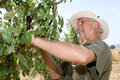 Farmer in an orchard Royalty Free Stock Photo