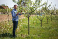 Farmer in the orchard Royalty Free Stock Photo