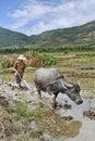 Farmer plows a rice field on Hainan Royalty Free Stock Photo