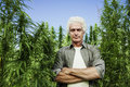 Farmer posing in a hemp field Royalty Free Stock Photo