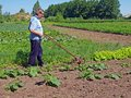 Farmer pushing tiller senior hand cultivator in garden Royalty Free Stock Photos
