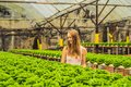 Farmer researching plant in hydroponic salad farm. Agriculture a Royalty Free Stock Photo