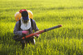 Farmer at rice field Royalty Free Stock Photo