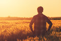 Farmer in ripe wheat field planning harvest activity Royalty Free Stock Photo