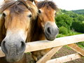 A farmer s horses in a field in the hills of england Royalty Free Stock Photography
