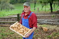Farmer show his organic potato Royalty Free Stock Image