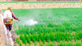 Farmer spraying pesticide on onion field Stock Images