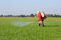 Farmer spraying pesticide in the rice field Royalty Free Stock Photos