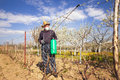 Farmer sprays his vineyard. Royalty Free Stock Photo