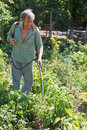 Farmer sprays pesticide on potato plantation in garden in summer Stock Image