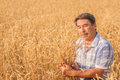 Farmer standing in a wheat field looking at the crop Royalty Free Stock Photo