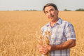 Farmer standing in a wheat field looking at the crop Stock Photo