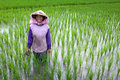 Farmer tending a paddy field, Indonesia Stock Image