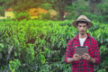 Farmer using digital tablet computer in cultivated coffee field plantation