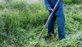 Farmer using scythe to mow the lawn traditionally Royalty Free Stock Photo