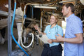 Farmer and vet inspecting dairy cattle in milking parlour checking output Royalty Free Stock Photography