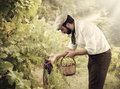 Farmer in the vineyard winegrower while harvesting grapes Royalty Free Stock Images