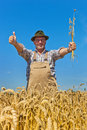Farmer in a wheat field Stock Image