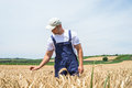 Farmer in wheat fields Royalty Free Stock Photo