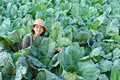 Farmer woman in cabbage field Stock Photos