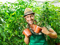 Farmer at work in a greenhouse happy Royalty Free Stock Photography