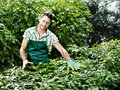 Farmer at work in a greenhouse working Royalty Free Stock Photography