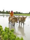 Farmer working in his paddy field Royalty Free Stock Image