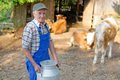 Farmer is working on the organic farm with dairy cows and holding big milk container pot model a real worker Stock Images