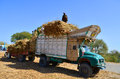 image photo : Farmers loading truck with sugar cane!
