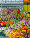 Farmers Market Flower and Vegetable Stand Royalty Free Stock Photo