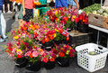 Farmers market flowers in virginia buckets of colorful for sale at an outdoor local reston Stock Photos