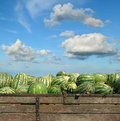 Farmers market heap of watermelon at over blue sky Royalty Free Stock Photos