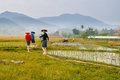 Farmers on rice field in Laos Royalty Free Stock Photo