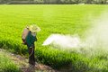 Farmers spraying pesticides in rice fields Royalty Free Stock Image