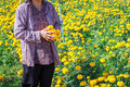 Farmers works in the flower , marigold field Royalty Free Stock Photo