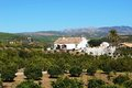Farmhouse and orange grove, Andalusia, Spain. Stock Images