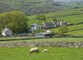 Farmhouse valley sheep Stock Photo